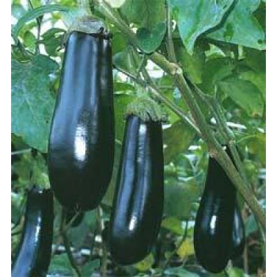 auberginen long purple eierpflanze melanzani saatgut. Black Bedroom Furniture Sets. Home Design Ideas