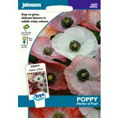 Papaver_mother_of_pearl